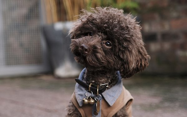 brighton local sets up new dog festival