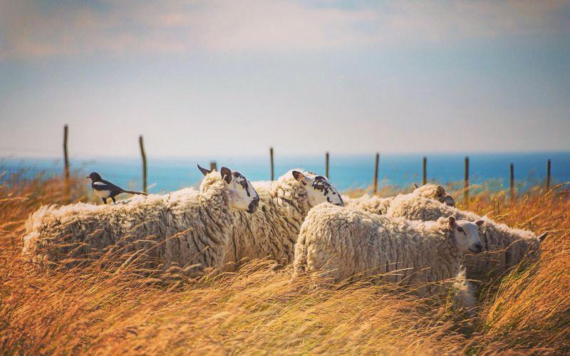 sheepcote-valley-brighton