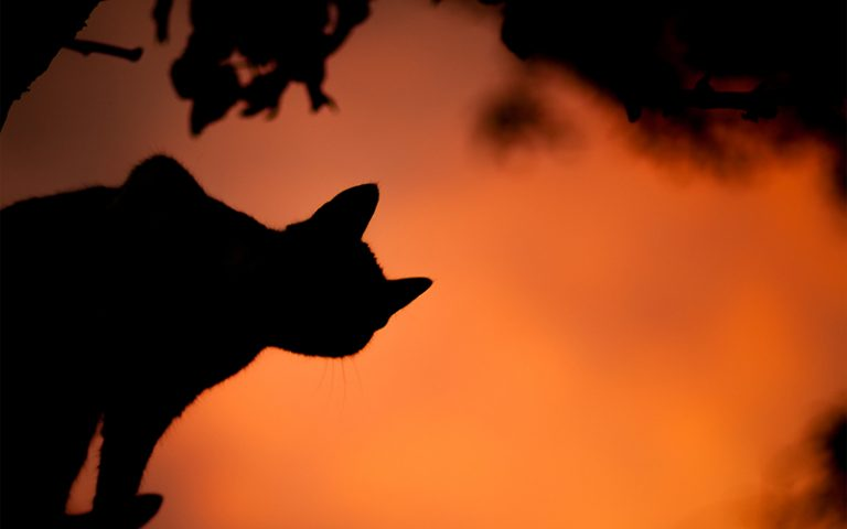 halloween-cat-brighton