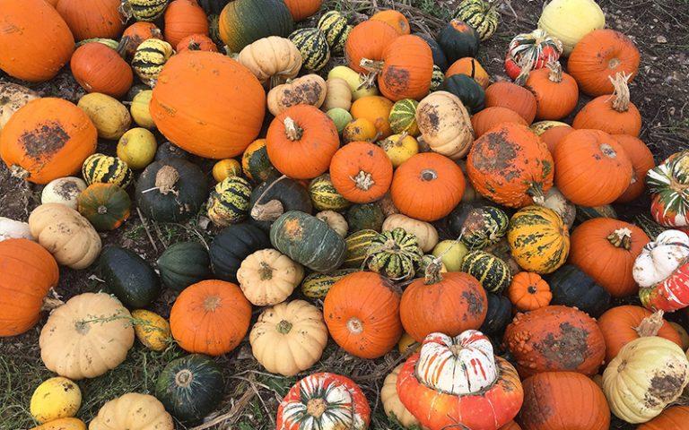 Different types of pumpkins brighton